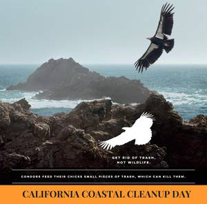California Coastal Cleanup Day – Marin County