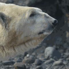 Party for Polar Bears