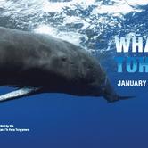Whales|Tohorā