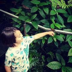 Fall Plant Sale Safari