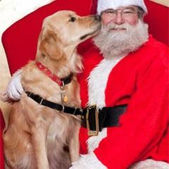 Santa Paws Pet Photos