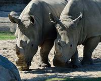 Rhino Open House