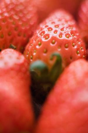 Vashon Island Strawberry Festival