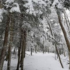 FULL - Snowshoe around Belcher's Marsh - A Hike NS Winter HIke