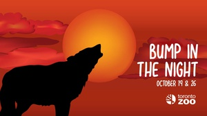 Bump In The Night- Halloween Family Program