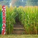Youth Farm Corn Maze