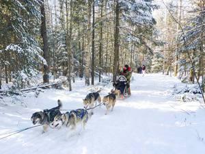 Dog Sledding and Snow Tubing