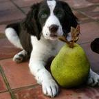 Doggylicious Gourmet
