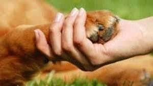 Companion Animal Reiki 1