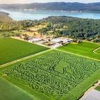 Pendray Farms Corn Maze