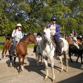 Equestrian Campout