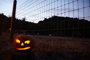 Halloween Haunt: A Journey through NeverNeverland