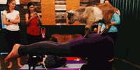 Goat Yoga by Shenanigoats with Amber