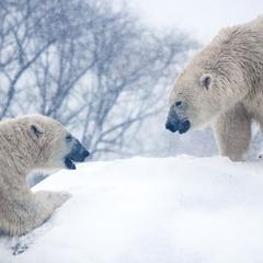Polar Bear Day at the Zoo