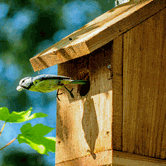 Making Birdhouses with Jim Critchley