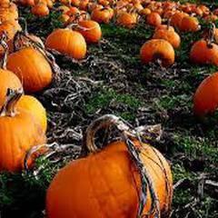 West Van Pumpkin Fest