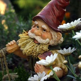 Gnome's Sweet Home