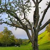 Garin & Dry Creek Pioneer Regional Parks