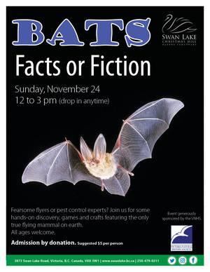 Bats Facts or Fiction
