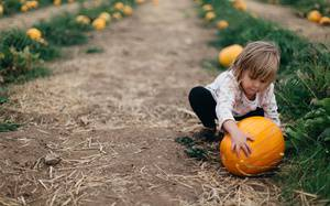8 Best Corn Mazes & Pumpkin Patches For Kids and Families in Toronto / the GTA