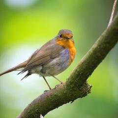 Urban Birding - Green Spaces