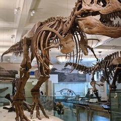 Ultimate Dinosaurs Sleepover