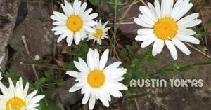 Texas Wildflower Run