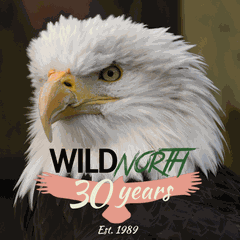 WILDNorth Wildlife Rescue & Rehabilitation