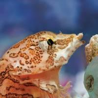 Spring Break Fun for Gills and Buoys at Vancouver Aquarium