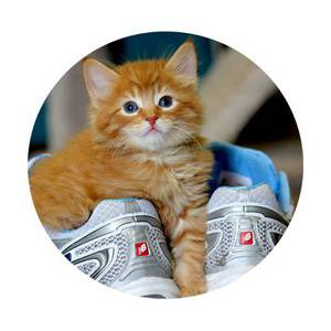 Whisker Walk for Craig Street Cats 2019