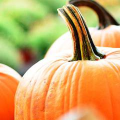 Pumpkin Patch Workshop at Eva James (3 to 6 years old)