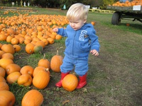 The Pumpkin Patch at Richmond Country Farms