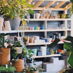 Green Your Thumb: Houseplant Workshop