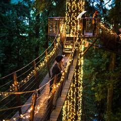 Canyon Lights at Capilano Suspension Bridge
