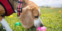 Wag Hotels' 9th Annual Easter Egg Hunt for Dogs