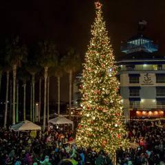 Jack London Square Tree Lighting