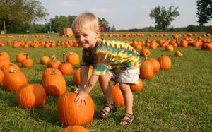 5 Coolest Corn Mazes & Pumpkin Patches in Winnipeg
