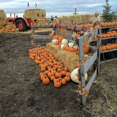 Autumn Pumpkin Festival