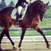 Jump into Spring Schooling Show