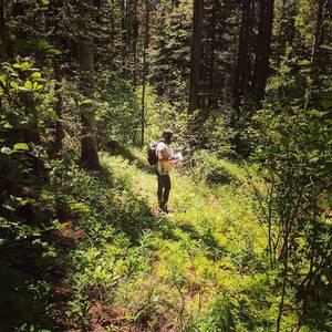 Sustainable Wild Harvesting