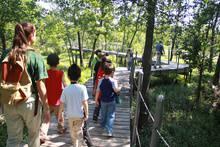 Camp Cougar - Heard Summer Nature Camps