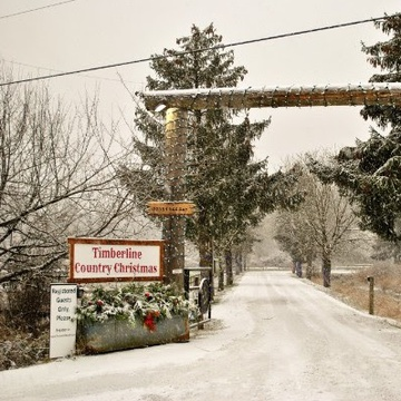 Timberline Ranch's promotion image