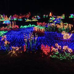 Garden d'Lights at the Bellevue Botanical Garden