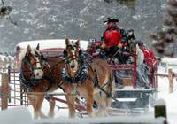 Horse Drawn Caroling Rides 18mths-99yrs
