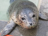 Marine Science Sunday: Seal and Sea Lion Superstars of 2017