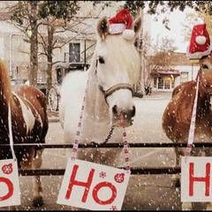 Christmas Break Activities with Hatfield Farm! Family Round-Up!