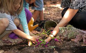 Go Green and Grow Herbs in your Own Garden with your Kids