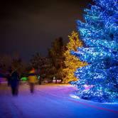 "Enchanted Forest ""Light Walk"""