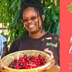Cherry Harvest 2019!