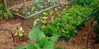 Planning Your Year Round Veggie Garden